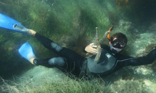skindiver underwater holding a starfish